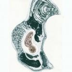 Chimalis - Collagraphie - plaque découpée